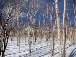 岳樺の林を抜けると…