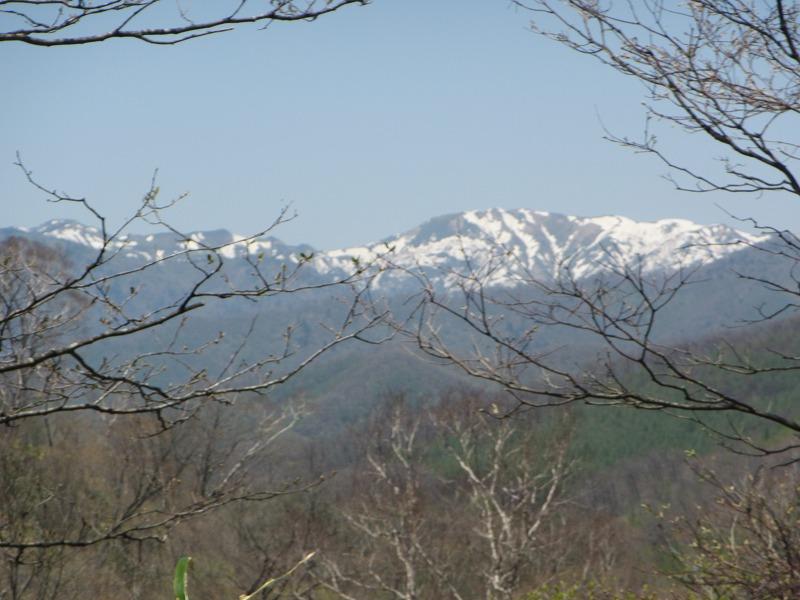 世立林道からの八間山(2013年5月13日)