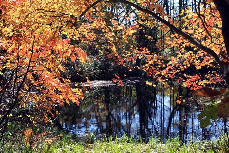 6000年前からあるという神秘の池