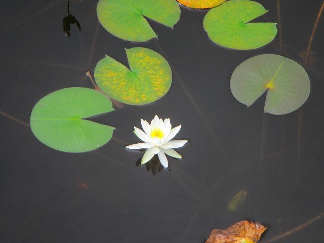 野反湖うらやまガイドIMG_0922