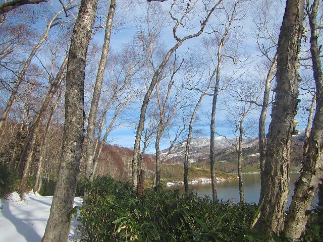 シラカバ渕からの大倉山