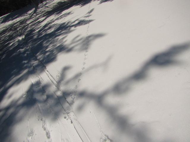 野反湖うらやまガイドIMG_6051
