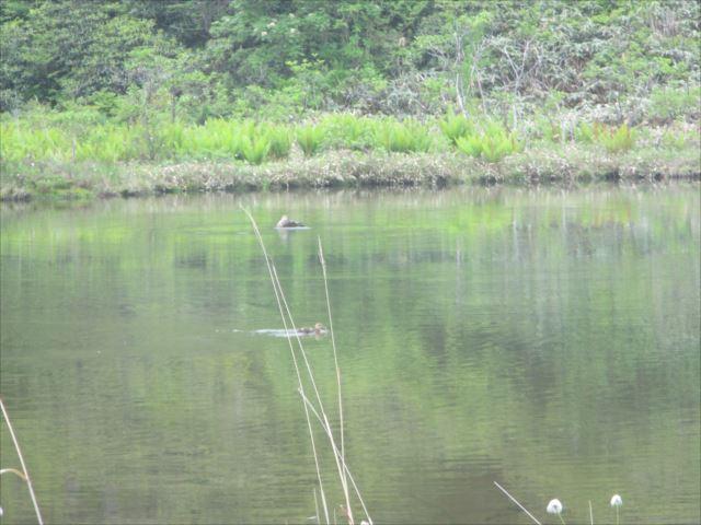 野反湖うらやまガイドIMG_1438_r