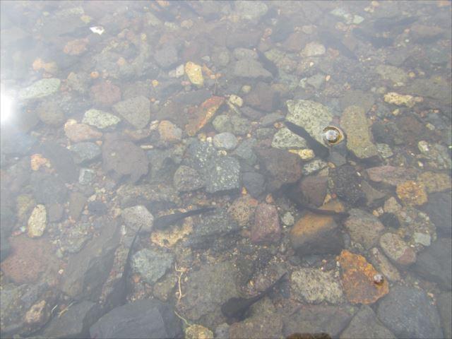 野反湖うらやまガイドIMG_6478_r